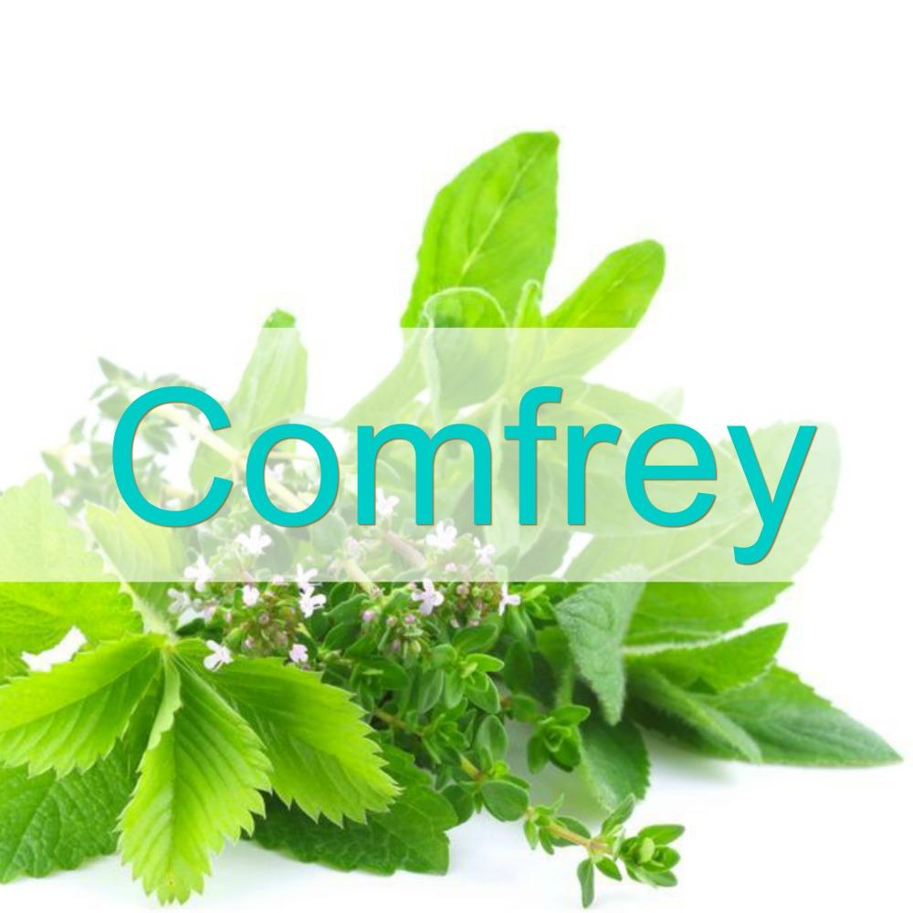 comfrey-1000px-lh.jpg