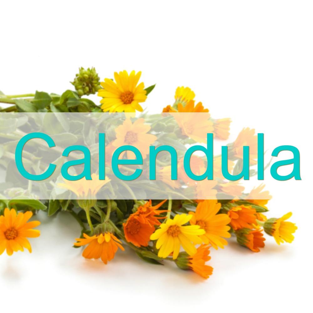 calendula-1000px-lh.jpg