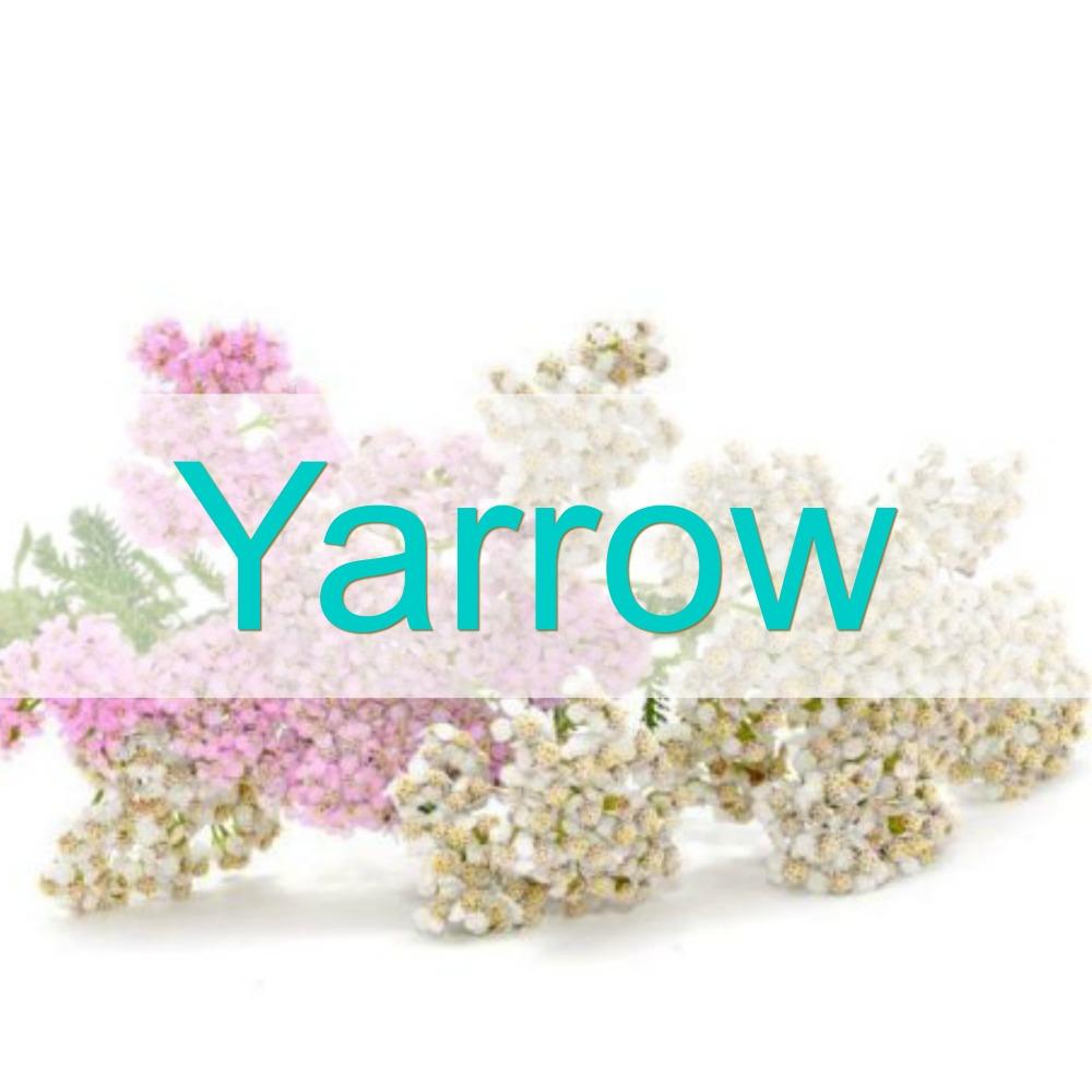 yarrow-1000px-lh.jpg